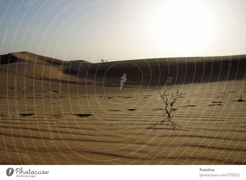 Spuren im Sand Umwelt Natur Landschaft Pflanze Urelemente Erde Himmel Wolkenloser Himmel Gras Wüste hell natürlich Ferne Wüstenpflanze Farbfoto mehrfarbig