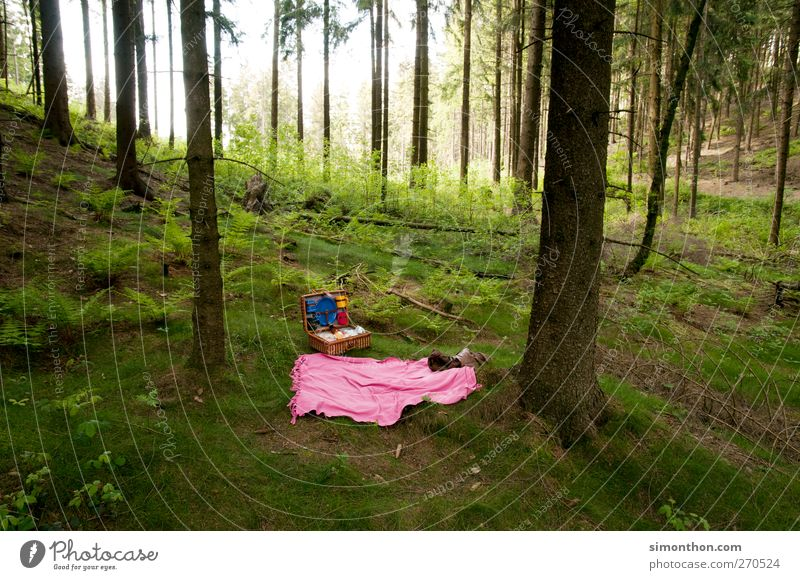 picknick Umwelt Erholung Picknick Picknickkorb Wald Ausflug Ferien & Urlaub & Reisen frei rosa Platz Waldlichtung Teutoburger Wald Baum Farbfoto