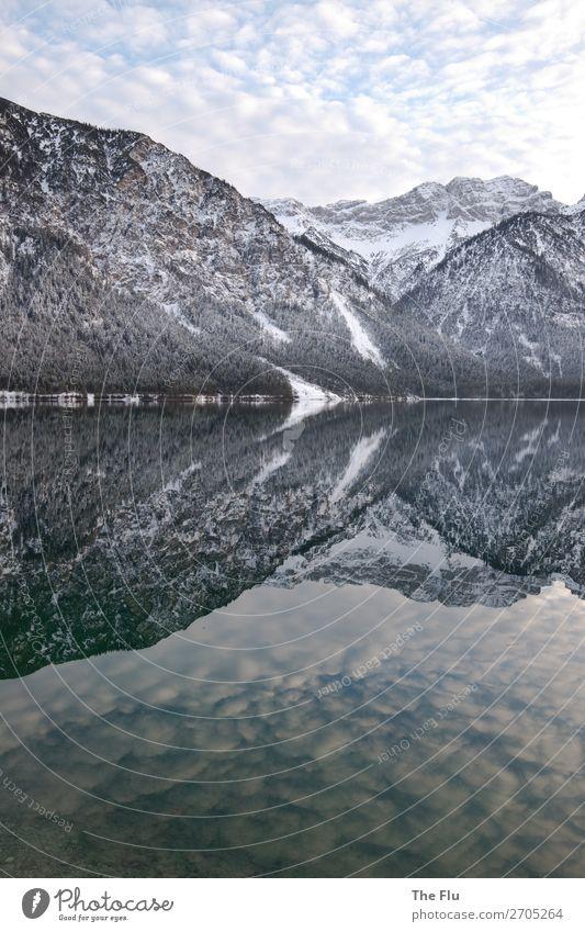 Spiegelglatt Natur Landschaft Himmel Wolken Winter Wetter Schönes Wetter Schnee Baum Alpen Berge u. Gebirge Gipfel Schneebedeckte Gipfel Seeufer Plansee