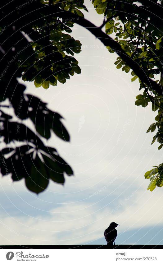 Ausschau zum Paradies Umwelt Natur Himmel Pflanze Baum Vogel 1 Tier schwarz Farbfoto Außenaufnahme Menschenleer Textfreiraum Mitte Tag Licht Schatten Kontrast