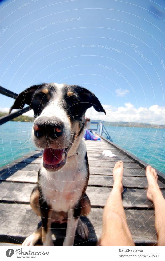 Island Dog Sommer Insel Tier Haustier Hund 1 Freude Glück Farbfoto Außenaufnahme Textfreiraum oben Tag Tierporträt