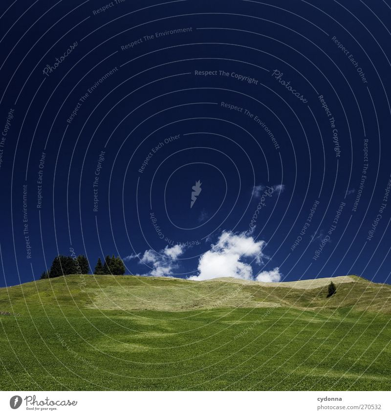 Tiefblau Himmel Natur Ferien & Urlaub & Reisen Sommer Baum Erholung Einsamkeit Landschaft ruhig Wolken Ferne Berge u. Gebirge Umwelt Wiese Freiheit