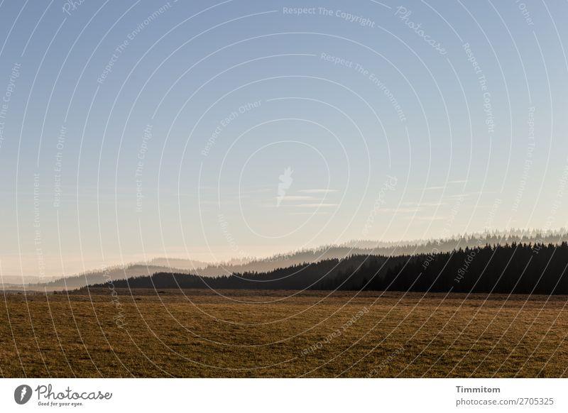 Sanfte Hügel Ferien & Urlaub & Reisen Umwelt Natur Landschaft Pflanze Erde Himmel Schönes Wetter Baum Gras Wiese Wald Schwarzwald Freundlichkeit natürlich blau