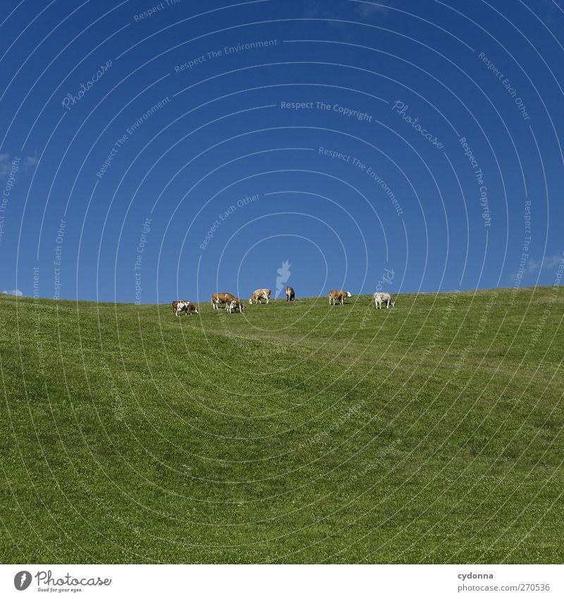 Tiergruppe auf grün/blau Natur Sommer ruhig Erholung Ferne Umwelt Landschaft Wiese Leben Gras Freiheit träumen Horizont Gesundheit einzigartig Idylle