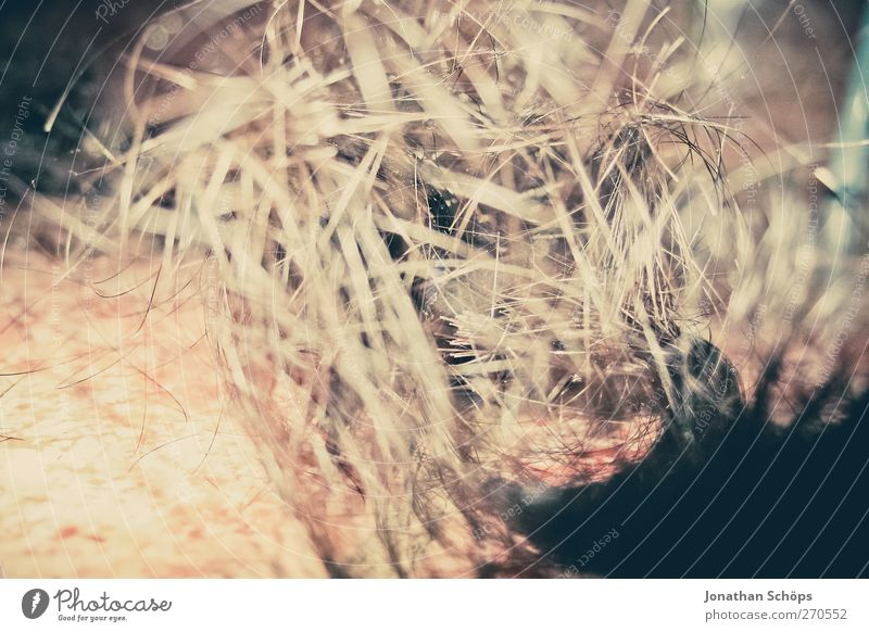 Am besten is hier Haare schneiden! Haare & Frisuren dreckig Boden Sträucher Müll Locken Schmerz durcheinander Friseur langhaarig Friseursalon Ekel geschnitten verlieren Neuanfang Kopfschuppe