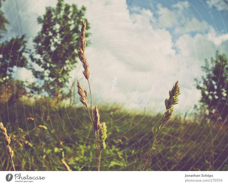 liegend Himmel Natur Pflanze schön Sommer Baum Erholung Wolken Umwelt Wiese Gras natürlich Stimmung träumen Zufriedenheit genießen
