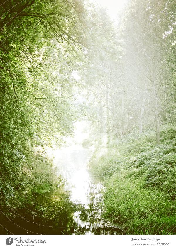 Auenland Umwelt Natur Landschaft Pflanze Sommer Klima Schönes Wetter Grünpflanze Wald Zufriedenheit Abenteuer Waldlichtung Waldsee Licht Lichterscheinung