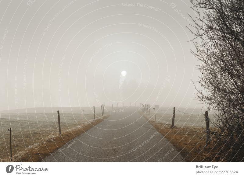 Vernebelte Sonne Ausflug Winter Natur Landschaft Sonnenlicht Nebel Feld Menschenleer bedrohlich kalt natürlich weich grau Beginn Perspektive Frost Wege & Pfade