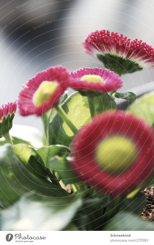 Blumig Natur weiß grün schön rot Pflanze Sommer Tier Blatt Umwelt Wiese Frühling Garten Blüte Park ästhetisch