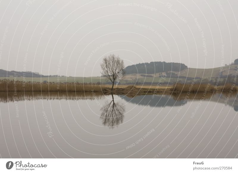 Doppelkrone Himmel Natur Wasser Baum ruhig Landschaft Frühling Holz grau See braun ästhetisch Sträucher Spiegel