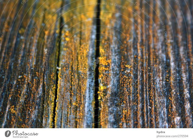 Stegbewohner Natur alt Pflanze gelb Wand Holz Wege & Pfade grau Mauer braun dreckig Brücke kaputt Vergänglichkeit einfach Ewigkeit