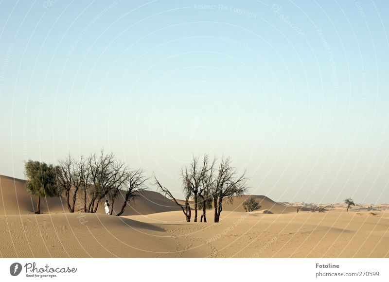 Märchen aus Tausend und einer Nacht Mensch Frau Himmel Natur Jugendliche Baum Pflanze Erwachsene Umwelt Landschaft feminin Wärme Sand hell Junge Frau Erde