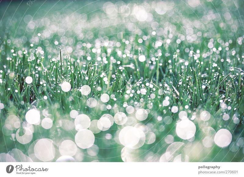 Morgenstund hat Gold im Mund Natur Wasser Wassertropfen Sonnenaufgang Sonnenuntergang Sonnenlicht Frühling Schönes Wetter Pflanze Gras Garten Wiese frisch hell