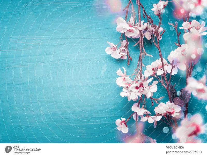 Frühlings Kirschblüten Zweige auf türkis blau Natur Pflanze weiß Blume Blatt Hintergrundbild Blüte Feste & Feiern Stil rosa Design Dekoration & Verzierung