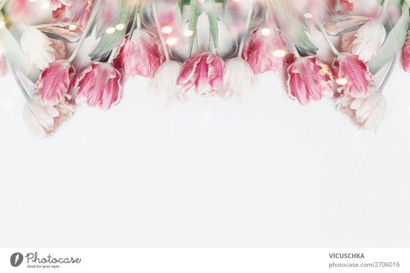 Pastell rosa Tulpen auf weißem Hintergrund Natur Pflanze Blume Hintergrundbild Frühling Feste & Feiern Stil Design Dekoration & Verzierung Geburtstag Hochzeit