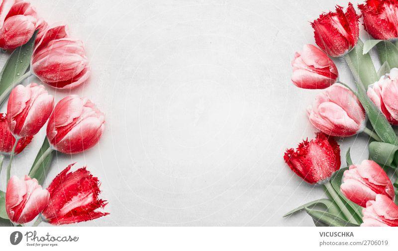 Rote Tulpen Hintergrund Rahmen kaufen Design Valentinstag Muttertag Geburtstag Natur Pflanze Frühling Dekoration & Verzierung Blumenstrauß Hintergrundbild
