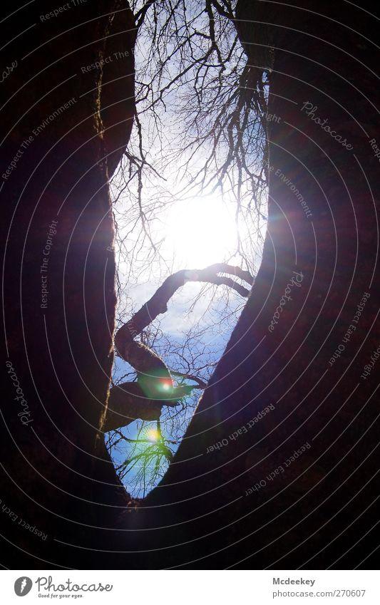 vernal reflection 2 Umwelt Natur Landschaft Pflanze Himmel Wolken Sonne Sonnenlicht Frühling Schönes Wetter Baum Wald authentisch groß hell natürlich blau braun
