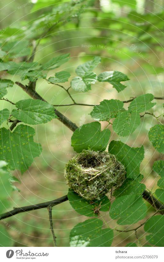 Leeres Nest des Baumes Leben Ostern Mann Erwachsene Umwelt Natur Tier Blatt Wald Gebäude Vogel sitzen klein natürlich wild grün Farbe Tierwelt Hintergrund Ei