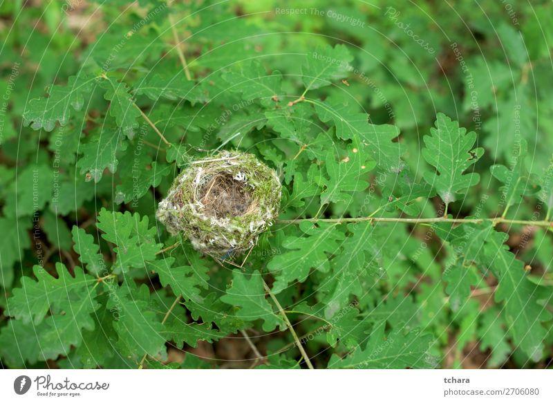 Nest der Eiche Leben Ostern Mann Erwachsene Umwelt Natur Tier Baum Blatt Wald Gebäude Vogel sitzen klein natürlich wild grün Farbe Tierwelt Hintergrund Ast