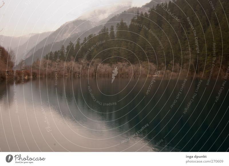 Stille Wasser... Natur Baum Pflanze Einsamkeit ruhig Wald Umwelt Landschaft dunkel kalt Berge u. Gebirge See trist Seeufer China