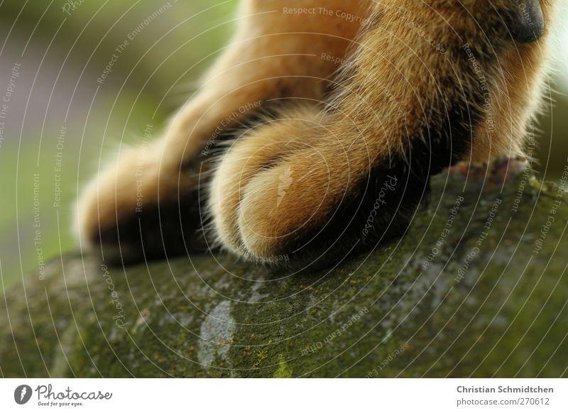 Baumpfote Natur Tier Haustier Katze Fell Pfote 1 gehen stehen sportlich Farbfoto Außenaufnahme Tag Schwache Tiefenschärfe