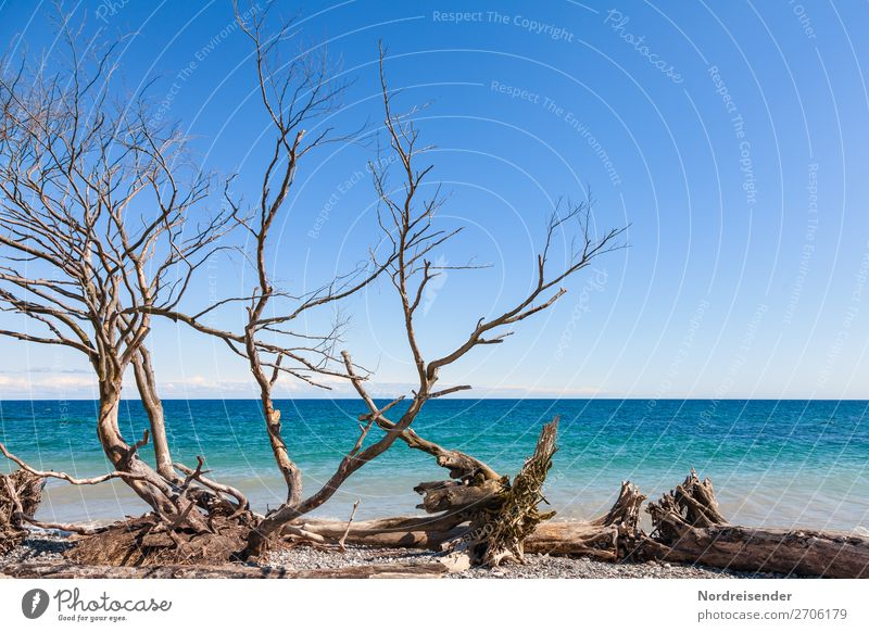 Ostsee in Dänemark Ferien & Urlaub & Reisen Ausflug Sommer Sommerurlaub Strand Meer Wellen Natur Landschaft Urelemente Wasser Wolkenloser Himmel Frühling Herbst