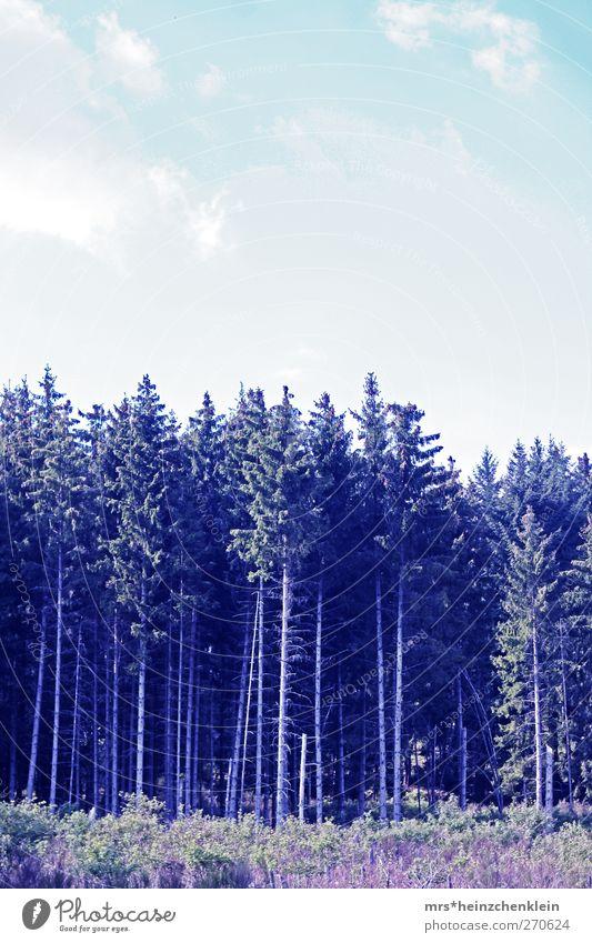 zauberwald Himmel Natur blau weiß grün Baum Sommer Wolken schwarz Wald Landschaft kalt Frühling Holz träumen rosa