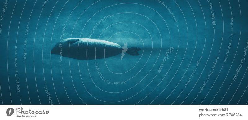 Torpedo-Dichtung Leben Schwimmbad Ferien & Urlaub & Reisen Tourismus Meer tauchen Natur Tier Pelzmantel niedlich unten wild blau Bildende Kunst Siegel Wasser