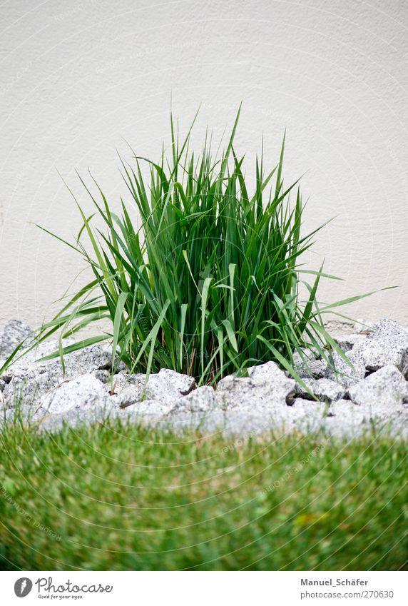 grasgrün - steingrau Pflanze Sommer Wand Gras Stein Garten Grünpflanze Granit