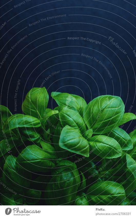 Basilikum Lebensmittel Salat Salatbeilage Kräuter & Gewürze Ernährung Essen Bioprodukte Vegetarische Ernährung Italienische Küche Pflanze Blatt frisch lecker