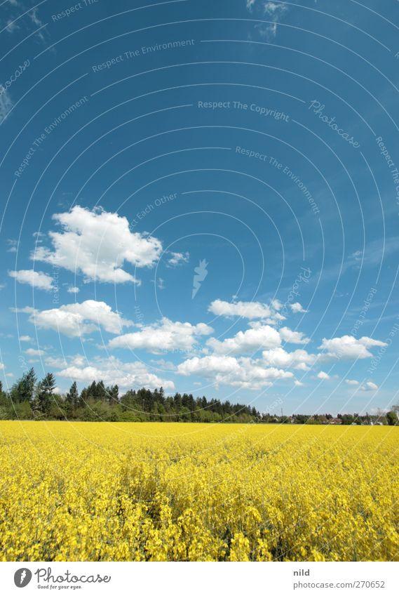 Weiß-blau-grün-gelb Umwelt Natur Landschaft Himmel Wolken Frühling Schönes Wetter Pflanze Nutzpflanze Raps Feld Landwirtschaft Bioprodukte Biokraftstoff