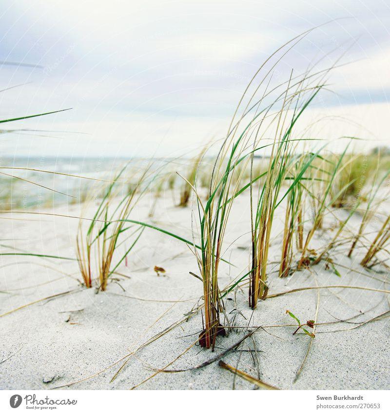 Meer in Sicht Himmel Natur Wasser Ferien & Urlaub & Reisen Pflanze Sommer Strand Wolken Ferne Umwelt Landschaft Gras Küste Sand Luft