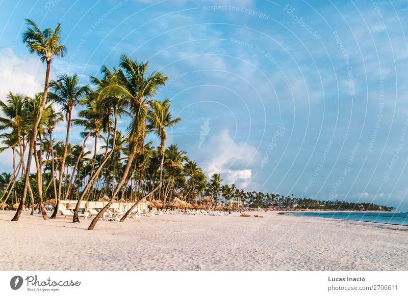 Ferien & Urlaub & Reisen Natur Sommer Baum Meer Blatt Strand Umwelt Küste Tourismus Sand Insel Postkarte Fernweh Palme Paradies