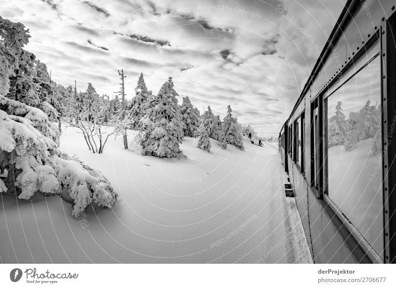 Harzer Schmalspurbahn auf dem Weg zum Brockengipfel Ferien & Urlaub & Reisen Tourismus Ausflug Abenteuer Ferne Freiheit Umwelt Natur Landschaft Pflanze Winter