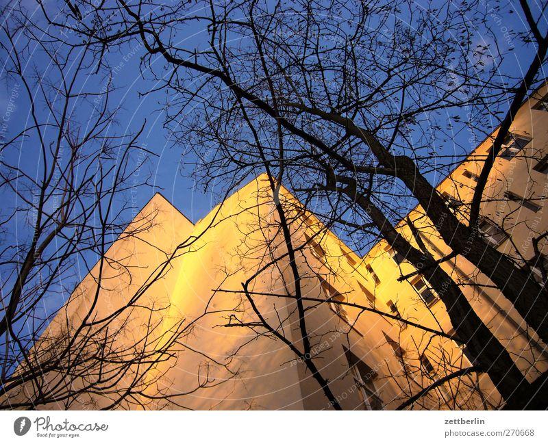 Mietshaus alt Himmel (Jenseits) Baum Haus Fenster Wand Architektur Herbst Gebäude Mauer Stimmung Fassade Häusliches Leben Ast Ecke Baumstamm