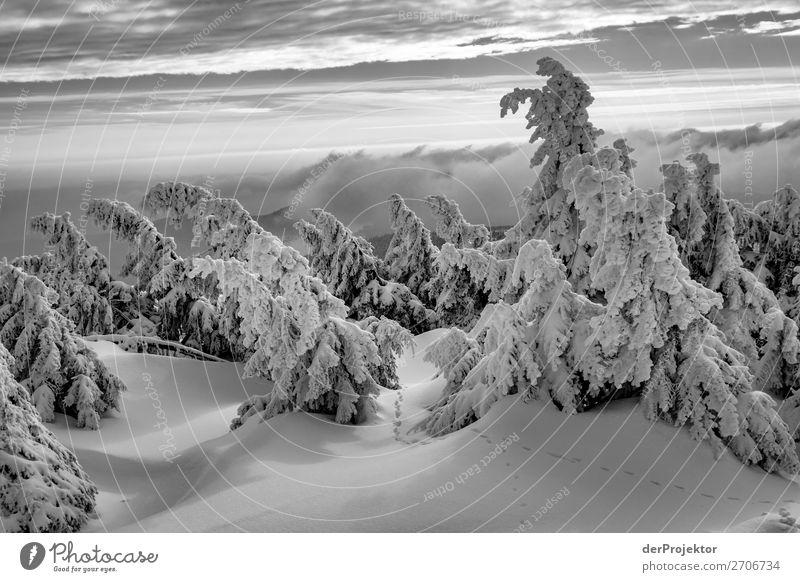 Winterlandschaft auf dem Brocken im Harz Ferien & Urlaub & Reisen Tourismus Ausflug Abenteuer Ferne Freiheit Winterurlaub Berge u. Gebirge wandern Umwelt Natur