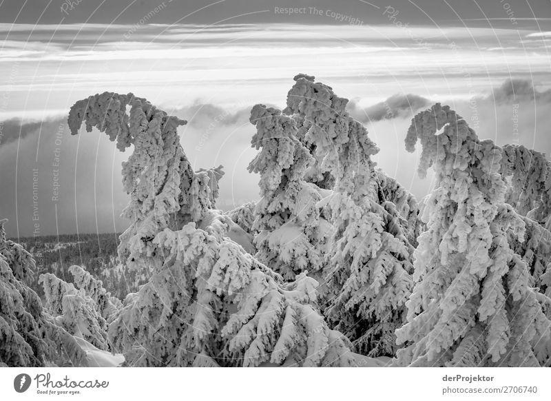 Winter auf dem Brocken Ferien & Urlaub & Reisen Tourismus Ausflug Abenteuer Ferne Freiheit Winterurlaub wandern Umwelt Natur Landschaft Pflanze Schönes Wetter