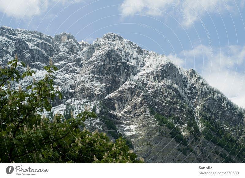 Berg am Königssee Himmel Natur Ferien & Urlaub & Reisen Pflanze Baum Erholung Landschaft Blatt Wolken Berge u. Gebirge Umwelt Frühling See Deutschland Felsen Tourismus