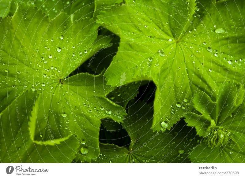 Tautropfenmakro für Carlitos Sommer Garten Umwelt Natur Landschaft Pflanze Klima Wetter Unwetter Gewitter Blatt Grünpflanze Park gut frühlig himmel