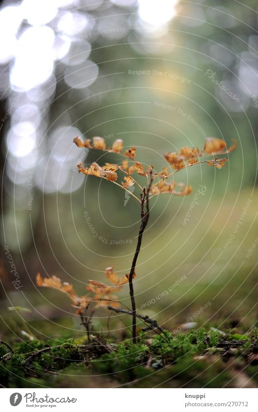 kleine Welt ganz gross Umwelt Natur Pflanze Sonnenlicht Sommer Baum Moos Wildpflanze Wald Wachstum frisch Gesundheit natürlich trocken braun gelb grün orange