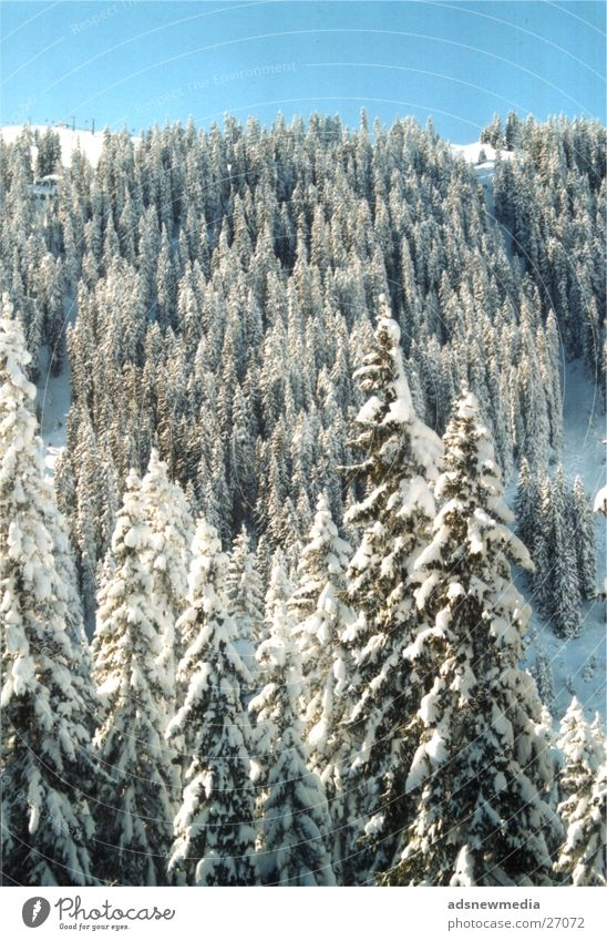 Snow Baum Berge u. Gebirge Schnee verschneite Landschaft