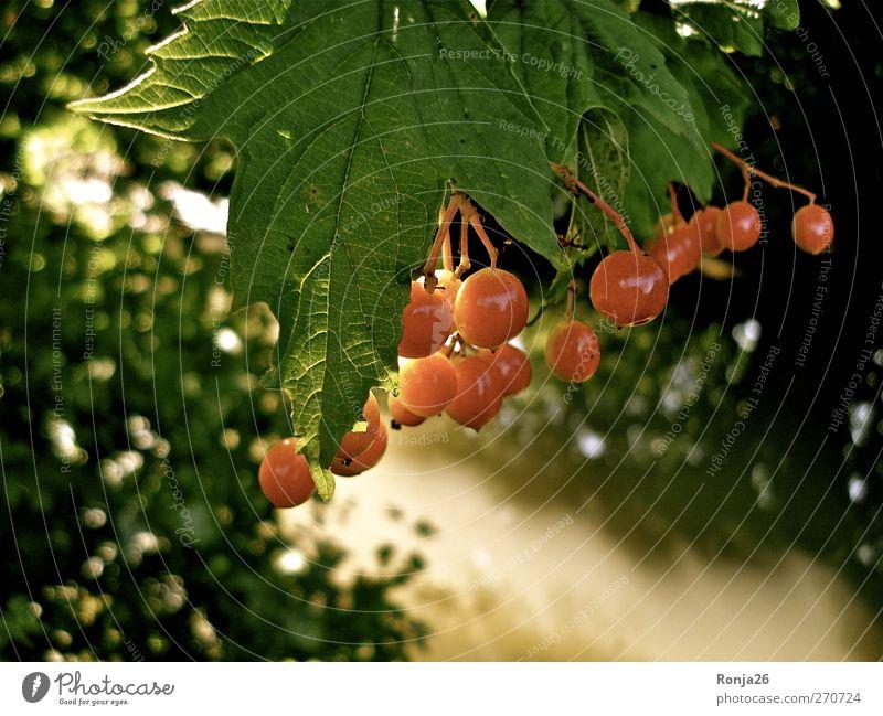 Red Balls Wasser Sonnenlicht Sommer Baum Sträucher Blatt Wald Bach schön Wärme grün rot Natur Farbfoto Außenaufnahme Menschenleer