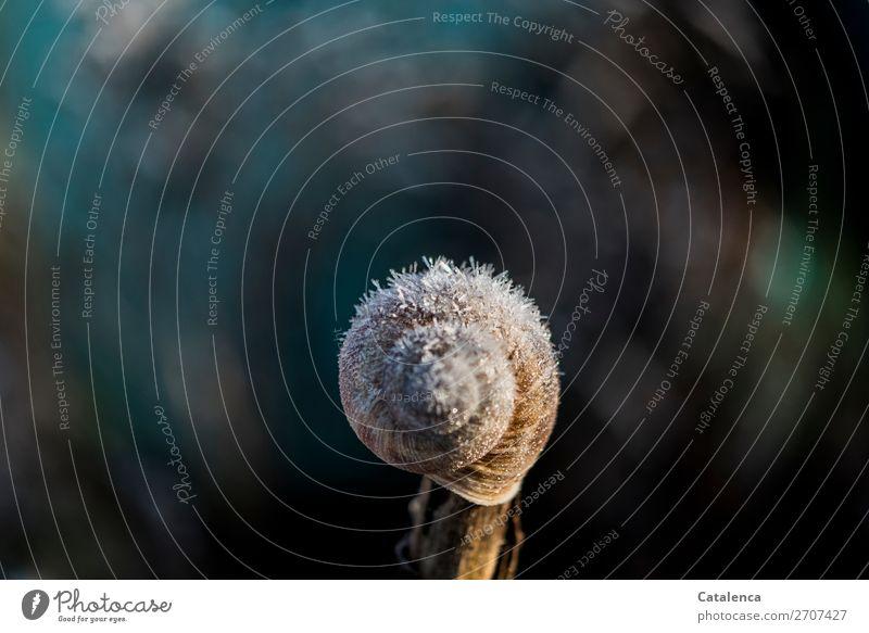 Frostpelz Natur blau schön grün weiß Tier ruhig Winter schwarz kalt Garten braun Stimmung Design Eis Wetter
