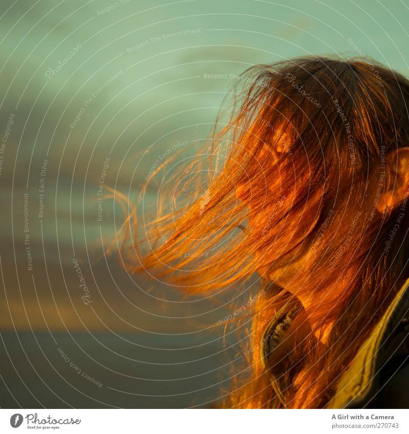 Hiddensee l hair Mensch Mann Jugendliche Meer Erwachsene Haare & Frisuren orange blond gold fliegen außergewöhnlich Junger Mann maskulin frei authentisch