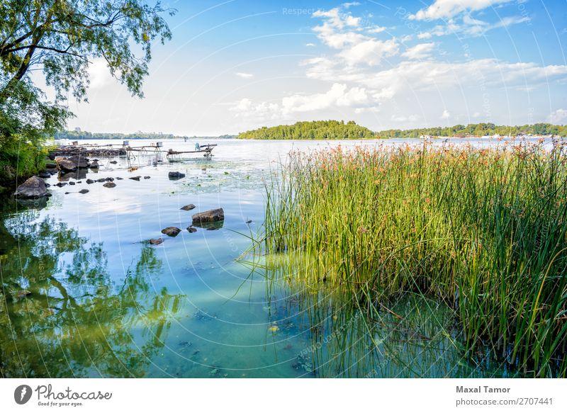 Schilf und Dnjepr-Fluss Kräuter & Gewürze Sommer Geldinstitut Umwelt Natur Landschaft Pflanze Himmel Wolken Wind Baum Gras Wald Küste See Wachstum natürlich