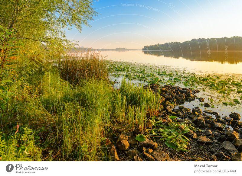 Blick auf den Dniper River am Morgen Ferien & Urlaub & Reisen Sonne Nebel Baum Gras Park Fluss gelb grün Frieden Dnjepr Dnipro Kiew kyiv Ukraine Windstille