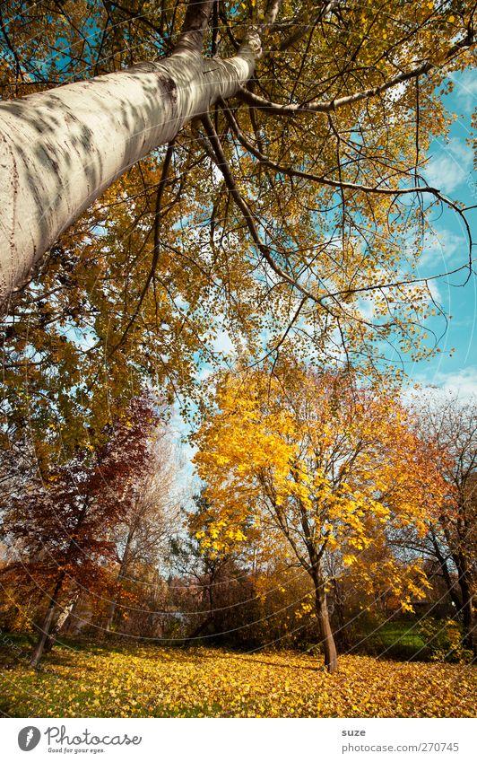 It´s Määätschik Himmel Natur blau Baum Pflanze Blatt Wald Umwelt Landschaft gelb Herbst lustig Luft Klima groß verrückt