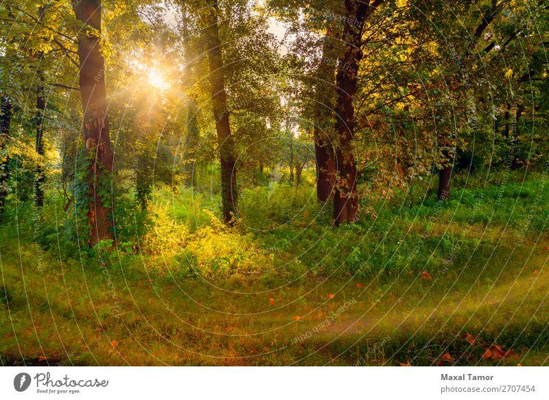 Sonnenaufgang im Wald Ferien & Urlaub & Reisen Sommer Nebel Baum Gras Park grün geheimnisvoll Kiew kyiv Ukraine Schlag Windstille glühen horizontal Licht