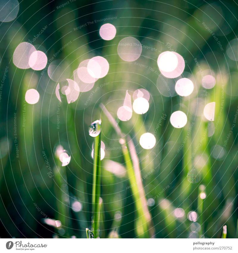 Morgenstund hat Gold im Mund II Umwelt Natur Pflanze Wasser Wassertropfen Sonne Sonnenaufgang Sonnenuntergang Sonnenlicht Frühling Wetter Schönes Wetter Gras