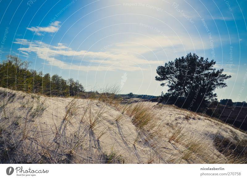 Hiddensee | The Secret Place . Himmel Ferien & Urlaub & Reisen Baum Sommer Strand Wolken Umwelt Gras Sand Energie Abenteuer leuchten Schönes Wetter Wüste Kitsch